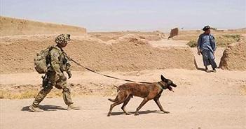 """Thiếu chó nghiệp vụ, Quân đội Mỹ tính """"nuôi"""" cả chó robot"""