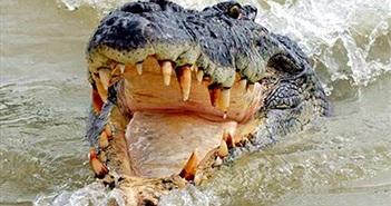 Liều lĩnh nhảy sông có cá sấu, trai trẻ nhận cái cái kết thảm