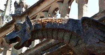 Đàn ong 200.000 con của Nhà thờ Đức Bà sống sót 'kỳ diệu' sau vụ cháy
