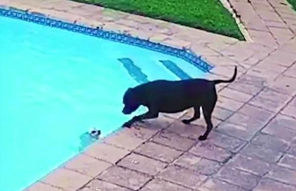 Chú chó thông minh đã cứu bạn thoát chết