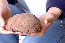 Trung Quốc: Đi dạo chơi, tình cờ vấp phải trứng khủng long 66 triệu năm tuổi
