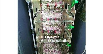 Chuột gặm nát 400 triệu đồng trong máy ATM