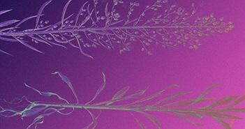 Lần đầu tiên phát hiện các hạt nano vàng trong thực vật hoang dã