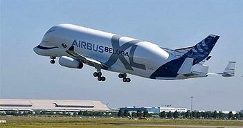 """""""Cá voi bay"""" Beluga XL cất cánh lần đầu tiên"""