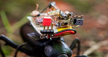 Camera hành trình gắn lên lưng côn trùng