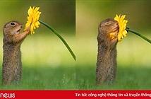 Những hình ảnh về một chú sóc ngửi hoa sẽ đốn tim bạn ngay tức thì