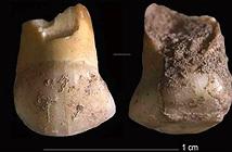 Bất ngờ phát hiện răng sữa 48.000 năm tuổi