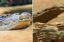 Cá sấu trên sao Hỏa