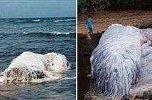 Xác quái vật phủ lông trắng trôi vào bờ, hô hào ra xem, nào ngờ...