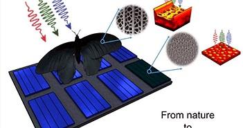 Tăng gấp đôi công suất pin năng lượng mặt trời nhờ mô phỏng... cánh bướm