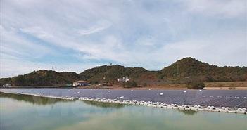 Nhật Bản phát triển nhà máy năng lượng Mặt Trời trên mặt nước