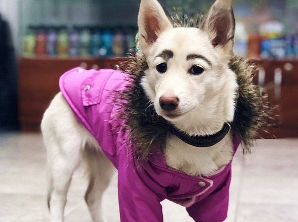 Chú chó lông mày lá liễu bị ghét bỏ bỗng chốc nổi tiếng