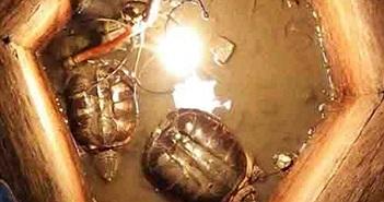 Phát hiện hai sinh vật sống thần kỳ trong giếng cổ bị lấp 30 năm