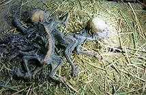 Phát hiện hai xác khô bị nghi là quái vật hút máu