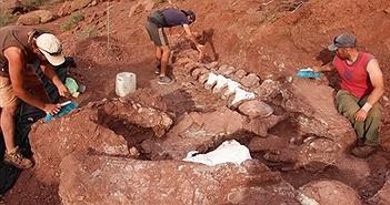 Phát hiện thấy hóa thạch khủng long khổng lồ 98 triệu năm tuổi
