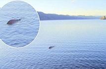 Thực hư cái chết của quái vật hồ Loch Ness