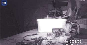 """Lắp camera, sốc khi nhìn thấy """"cô Tấm"""" dọn nhà hằng đêm"""