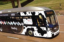 Xe bus chạy bằng... phân bò đạt tốc độ kỷ lục 120km/ giờ