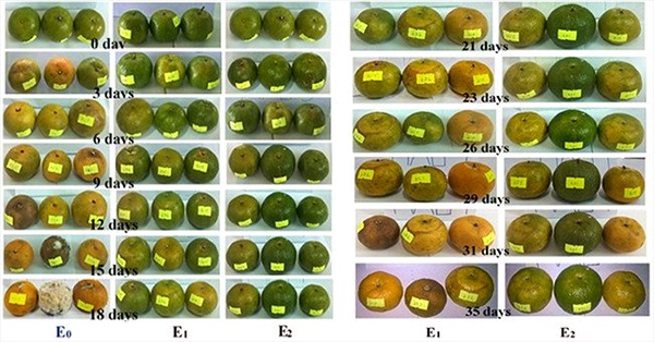 Trái cây tươi nguyên cả tháng nhờ màng bảo quản từ bột sắn và nano bạc