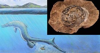 Phát hiện hóa thạch trứng 68 triệu năm tuổi, nghi của loài Thương long