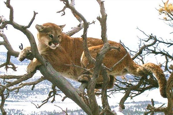 Bị sư tử tấn công, tưởng người đàn ông bỏ mạng và cái kết bất ngờ