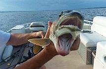 Nữ ngư phủ Mỹ sốc khi bắt được cá hai miệng kỳ dị