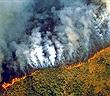Rừng Amazon cháy lớn, từ trên quỹ đạo cũng nhìn được khói