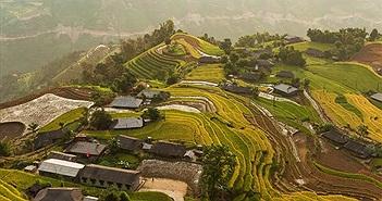 Mùa lúa chín Tây Bắc mỗi năm chỉ có 1 lần ở Việt Nam