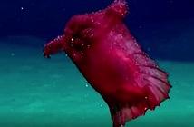 Thủy quái gà không đầu xuất hiện ở ngoài khơi Nam Cực