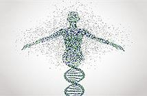 Siêu dự án quét được cơ thể người tới từng tế bào