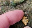 Đi dạo, đột nhiên đá phải di vật ngàn năm, trở thành triệu phú