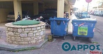 Đang cho mèo ăn, người phụ nữ thấy điều bất ngờ trong thùng rác
