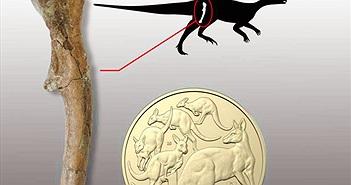 Lần đầu phát hiện hóa thạch khủng long con ở Nam bán cầu