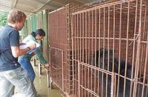 Bức xúc trước tình trạng gấu chết hàng loạt tại trang trại