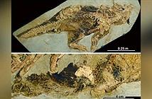 Hóa thạch tiết lộ cách khủng long giao phối và đi vệ sinh