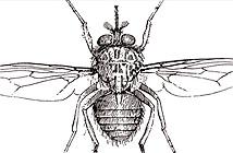 10 côn trùng sát thủ nguy hiểm nhất hành tinh