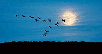 Vì sao đến mùa đông chim phải bay về phương nam?