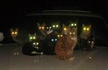 Tại sao mắt động vật có thể phát sáng trong đêm tối?