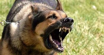 Cách phòng tránh và thoát thân khi bị chó dữ tấn công