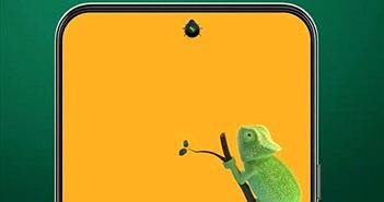 Đến tắc kè cũng thích smartphone sở hữu camera selfie ẩn dưới màn hình