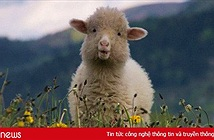 Chúng ta đang bị Facebook, Google biến thành những chú cừu non như thế nào?