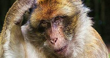 Cụ ông 72 tuổi đi nhặt củi bị khỉ ném gạch đến tử vong