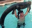 """Thấy cá sấu trong bể bơi, người đàn ông làm chuyện ai cũng """"khiếp""""..."""