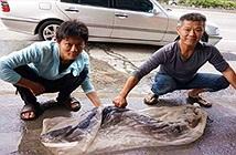 Chuyện lạ hôm nay: Bắt được cá thành tinh, làm điều bất ngờ
