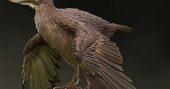 Bồ câu xấu xí như quái vật, là loài chim cổ xưa nhất