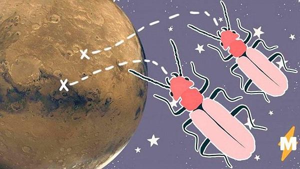 Nhà khoa học Mỹ tìm thấy dấu vết côn trùng trên sao Hỏa?