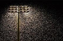Đèn điện khiến côn trùng diệt vong