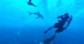 """Cá mập lao như tên bắn, cắn chân du khách """"đòi"""" đi cùng"""