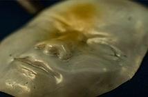 Vật liệu siêu đàn hồi có thay đổi hình dạng theo nhiệt độ