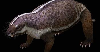 Hãi hùng con thú điên nguyên vẹn 66 triệu tuổi